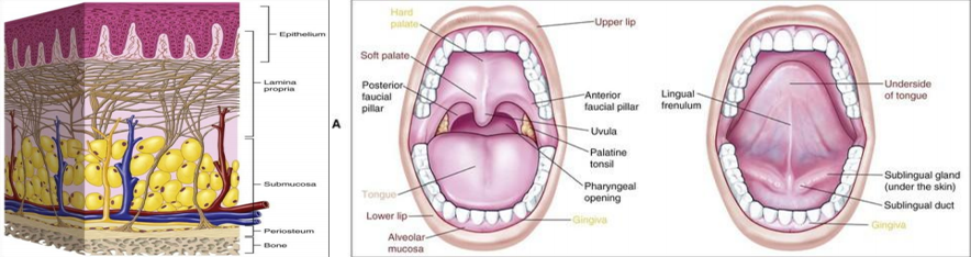 Buccal Tablets